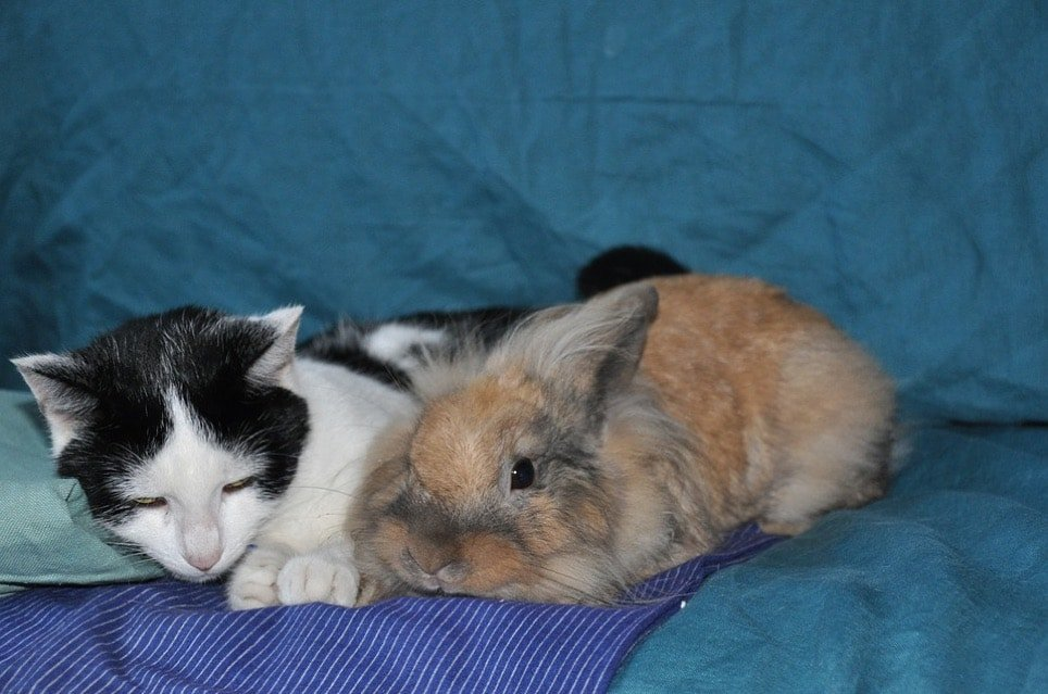 Bunny Proof Your Home Rabbit and Cat